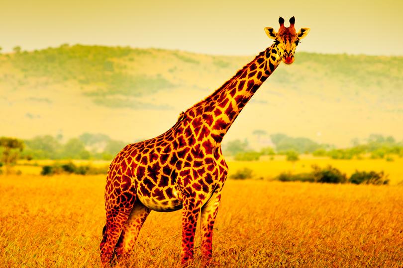 Proef Afrika TravelXL